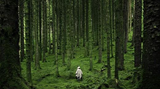 Лес у Форт-Уильяма
