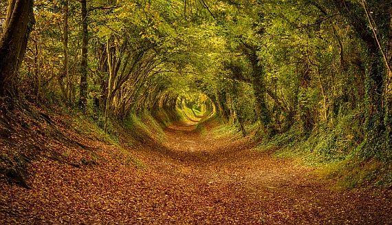 Эта удивительная природа Англии
