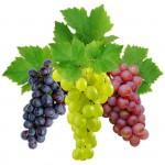 grape-150x150