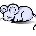 rifma-mouse