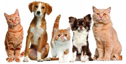 Топик на английском языке «Pets»