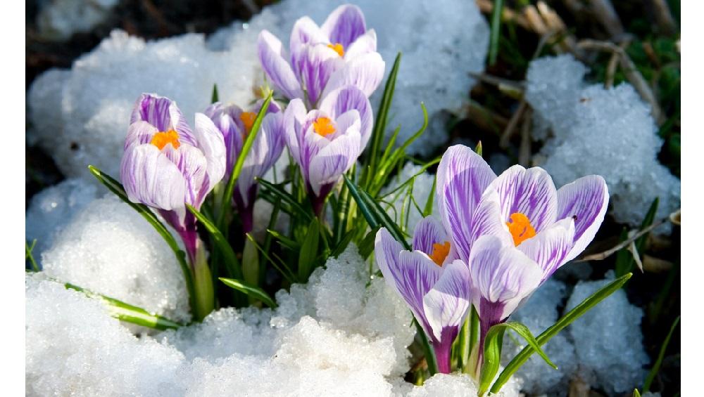 Весна... и красота!