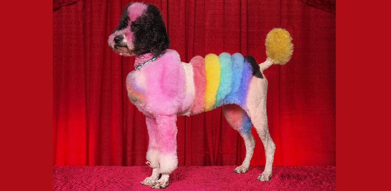 Топик на английском языке о необычном хобби— Colorful dogs