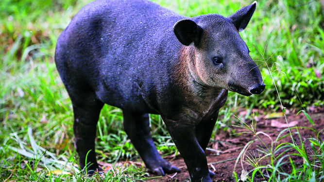 The strangest animals of the world. Топик на английском